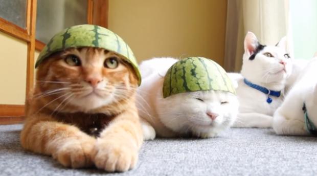 Les chats de Walter
